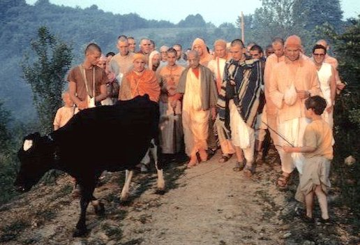 srila prabhupada and cow